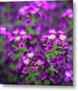 Tiny Purple Flowers Metal Print
