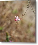 Tiny Red And White Wildflowers Metal Print