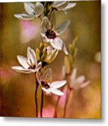Tiny Spring Blooms Metal Print