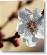 Tiny White Flower Metal Print