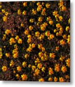 Tiny Yellow Flowrers On The Desert Floor Metal Print