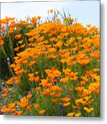 Tip Of Poppy Hill Metal Print