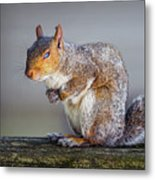 Tired Squirrel And Fly Metal Print