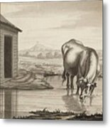 Title A Cow Standing In A Pool Beside  Metal Print