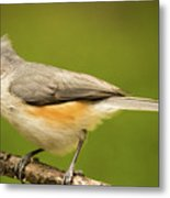 Titmouse With Bad Hairdo 3 Metal Print