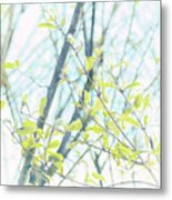 To Be In The Light Metal Print