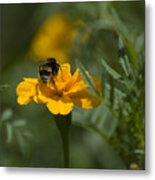 To Be Or Not To Bee Metal Print