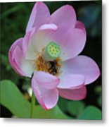 To Bee A Flower Metal Print