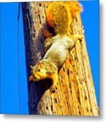 To Squirrels And To Me Metal Print by Guy Ricketts