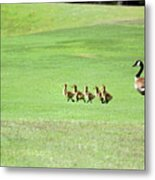 To The Pond Metal Print by Suzanne Gaff