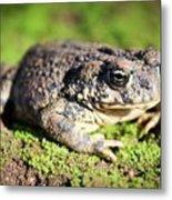 Toad You So Metal Print