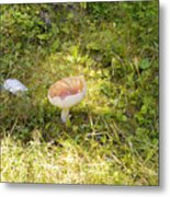 Toadstool Grows On A Forest Floor. Metal Print