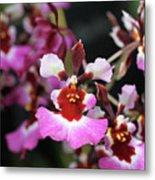 Tolumnia Pink Panther Orchid Metal Print