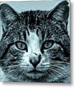 Tom Cat Metal Print