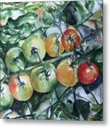 Tomatoes In Dad's Garden Metal Print