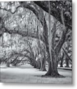 Tomotley Plantation Oaks Metal Print