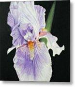 Tonto Basin Iris Metal Print