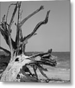 Toppled Tree Metal Print