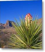 Torrey Yucca Metal Print