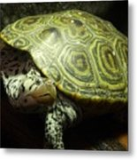 Turtle With A Tale To Tell Metal Print