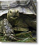 Tortoise's Stare Metal Print