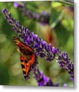 Tortoiseshell Butterfly On Lavender Metal Print