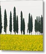 Toscana Cypresses Metal Print