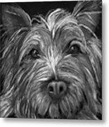 Tosha The Highland Terrier Metal Print