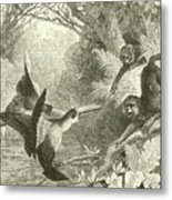 Toucans And Monkeys Metal Print