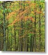 Touch Of Autumn Metal Print