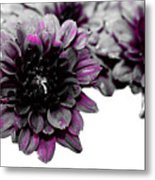 Touch Of Pink Mums Metal Print