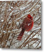 Touch Of Red For An Icy Morning Metal Print