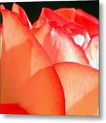 Touch Of Rose Metal Print