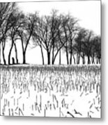 Touch Of Winter Blk N Wht Metal Print