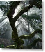 Touched By A Miracle Metal Print