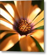 Touched By The Sun Metal Print
