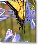 Touching Lilly Metal Print