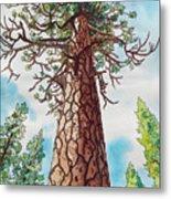 Towering Ponderosa Pine Metal Print