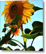 Towering Sunflower Metal Print