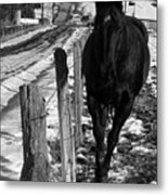 Towing The Line Metal Print