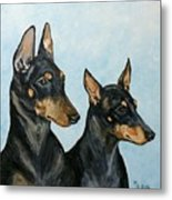 Toy Manchester Terriers Metal Print