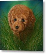 Toy Poodle Puppy Metal Print