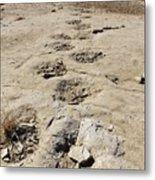 Tracks In The Desert 6 Metal Print