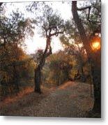 Trail At Sunrise Metal Print