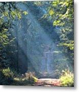 Trail In Morning Light Metal Print