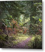 Trail In The Forest Metal Print