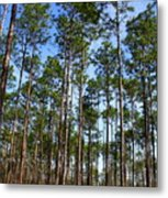 Trail Through The Pine Forest Metal Print