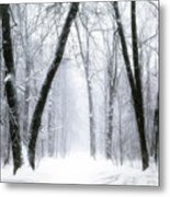 Trail Through The Winter Forest Metal Print