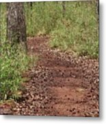Trail To Beauty Metal Print