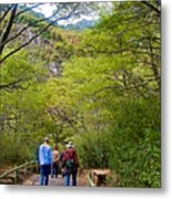 Trail To Waterfall In Vicente Perez Rosales National Park Near Puerto Montt-chile Metal Print